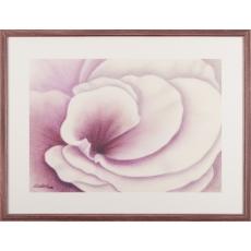 Fialová ruža I.